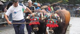 Feria_Ganado_Tiro-de-piedra_2