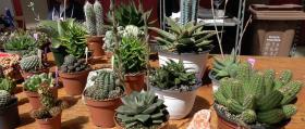 00_Puestos-de-flores-3_cactus