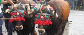 Feria_Ganado_Tiro-de-piedra_1